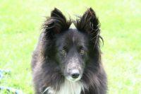 Max, a beautiful Supasnax dog!