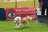Flyball Association Sponsored by Vital SupaSnax