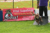 Vital SupaSnax sponsored Flyball Event