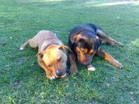 Cooper and Diesel